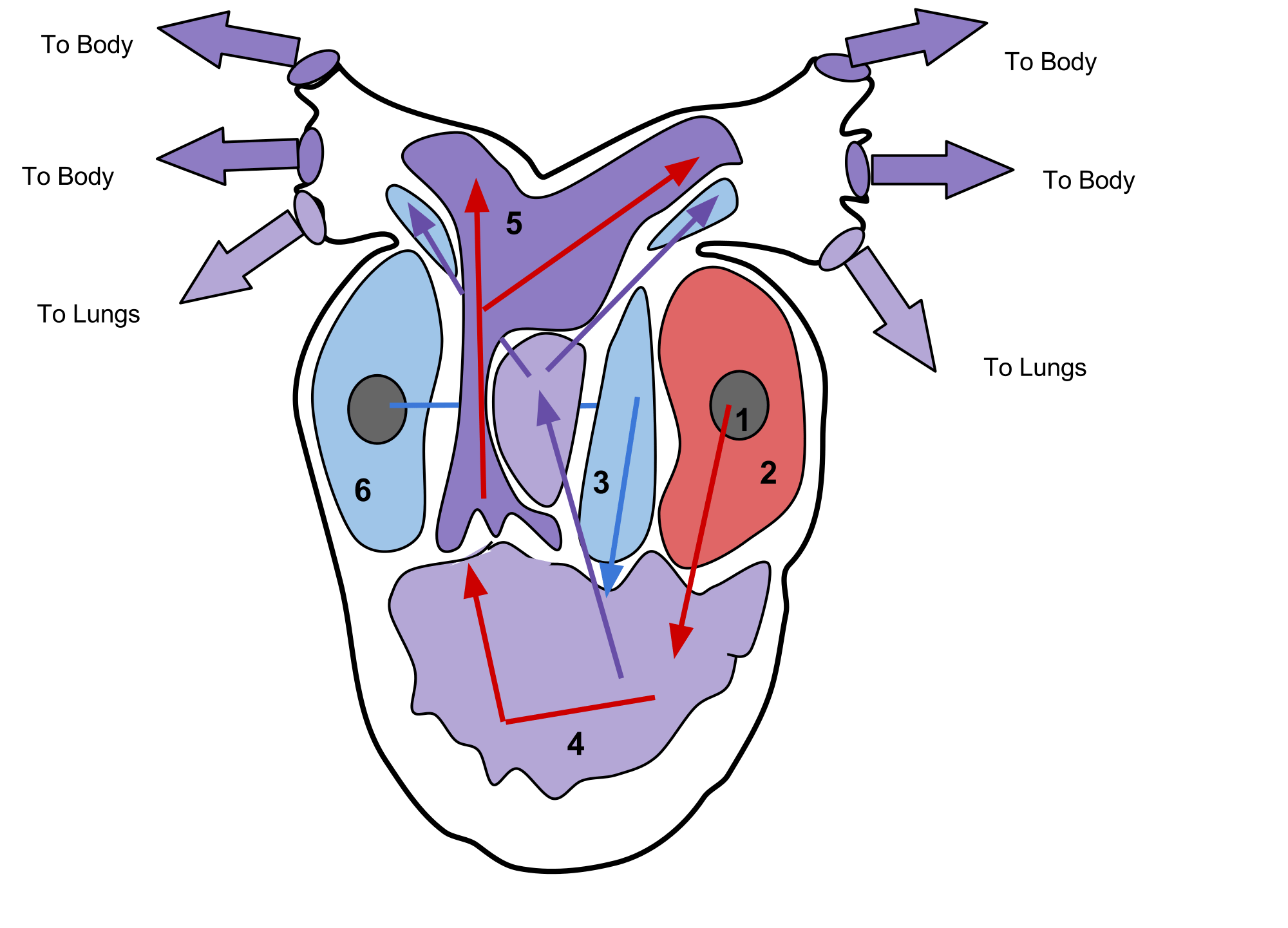 3 chambered heart diagram car alarm system wiring body regions clipart for ap clipground