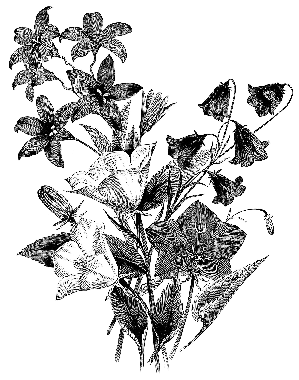 Vintage Flower Clipart Black And White
