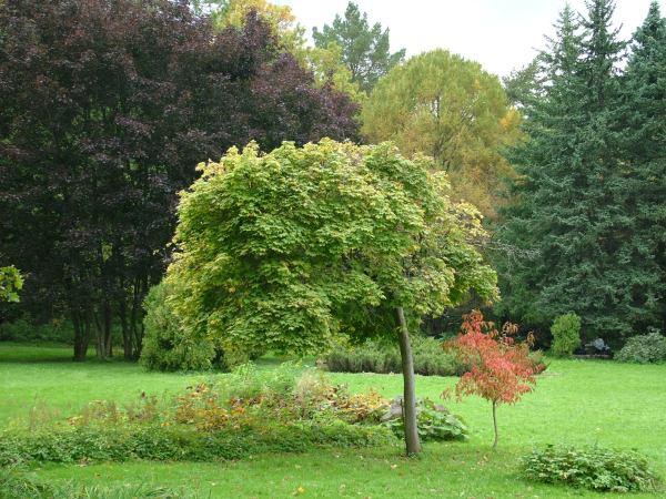 Botanic Garden Clipart - Clipground