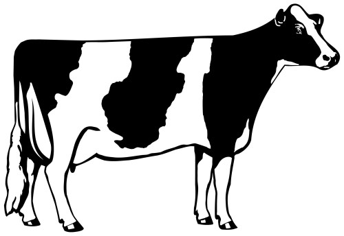 small resolution of holstein 101