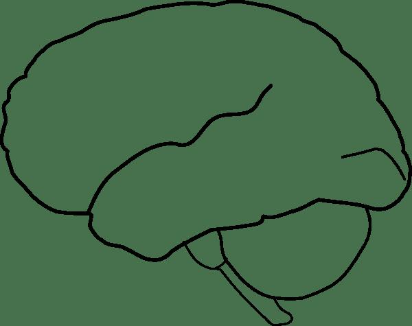 Clipart Brain Outline