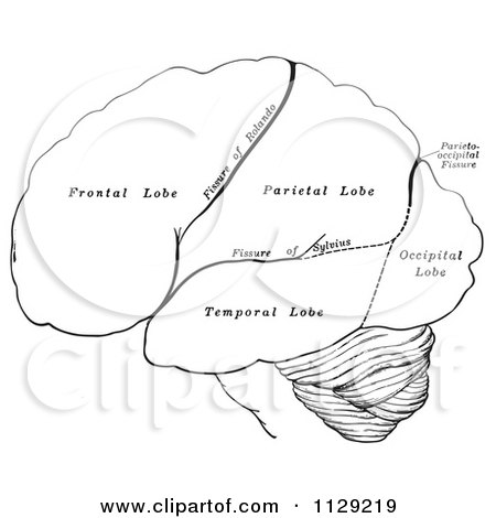 brain outline clipart black and white forward 20 free