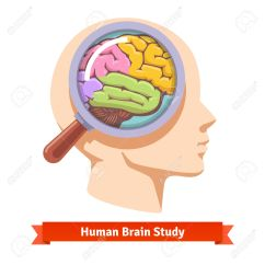 Diagram Of Human Cartoon Software Architecture Visio Brain Controls Body Clipart - Clipground