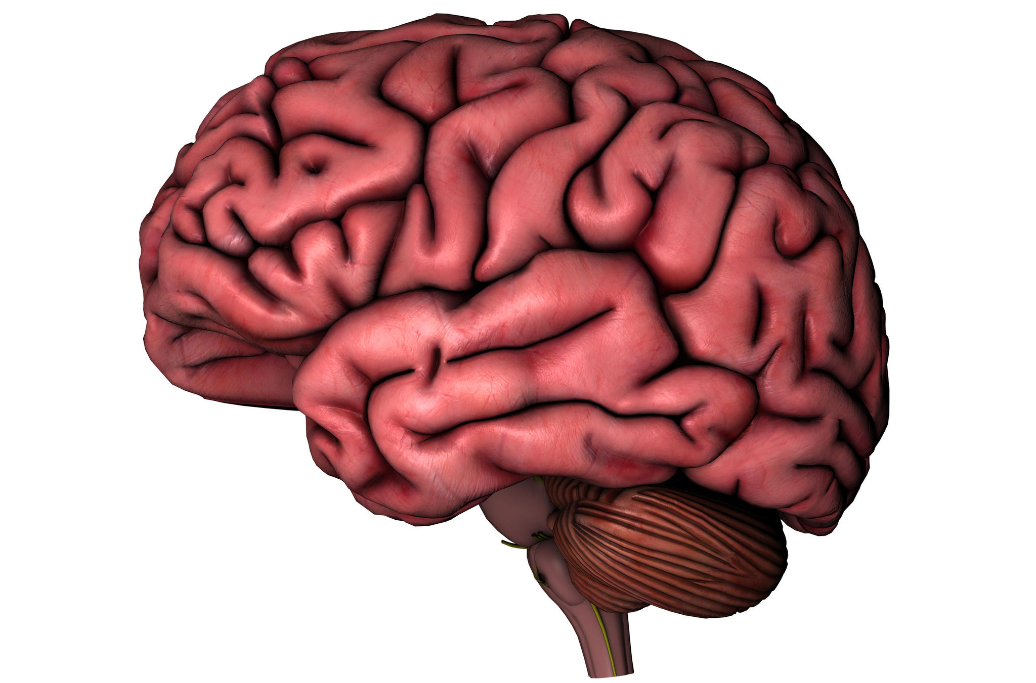 brain diagram without labels wiring for trailer brake controller body clipart clipground brains