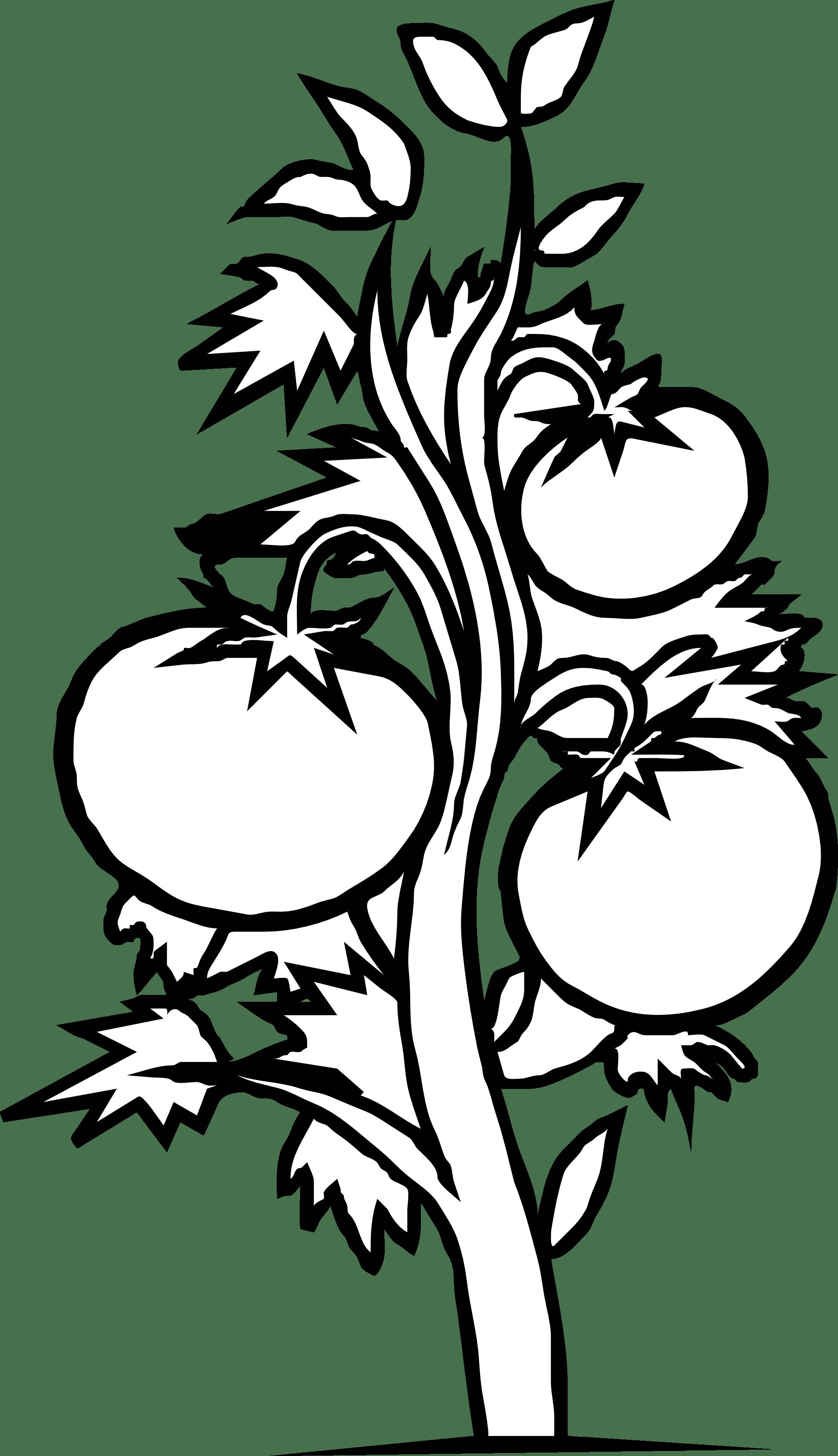 Black And White Vegetable Garden Clipart