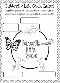 butterfly life cycle clipart black and white 20 free