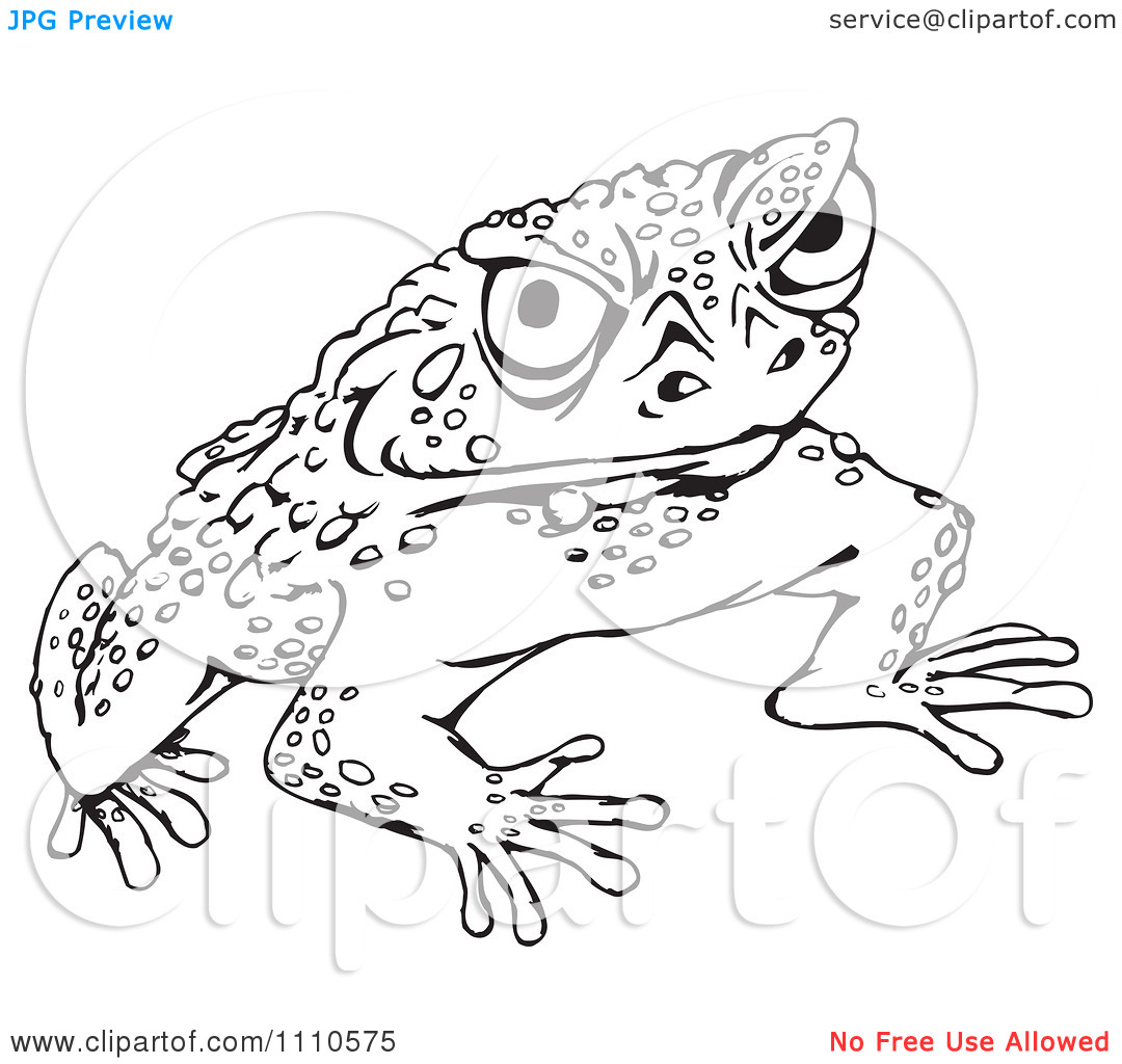 Cane Toad Clipart