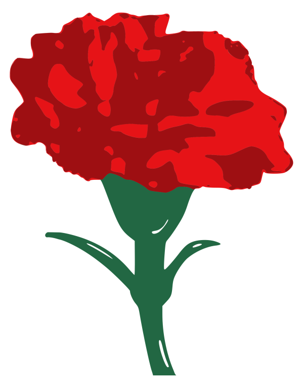 Carnation Family Clipart - Clipground