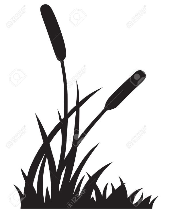 cattail clipart - clipground