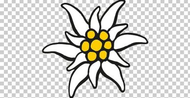 clipart edelweiss 10 free Cliparts   Download images on ...