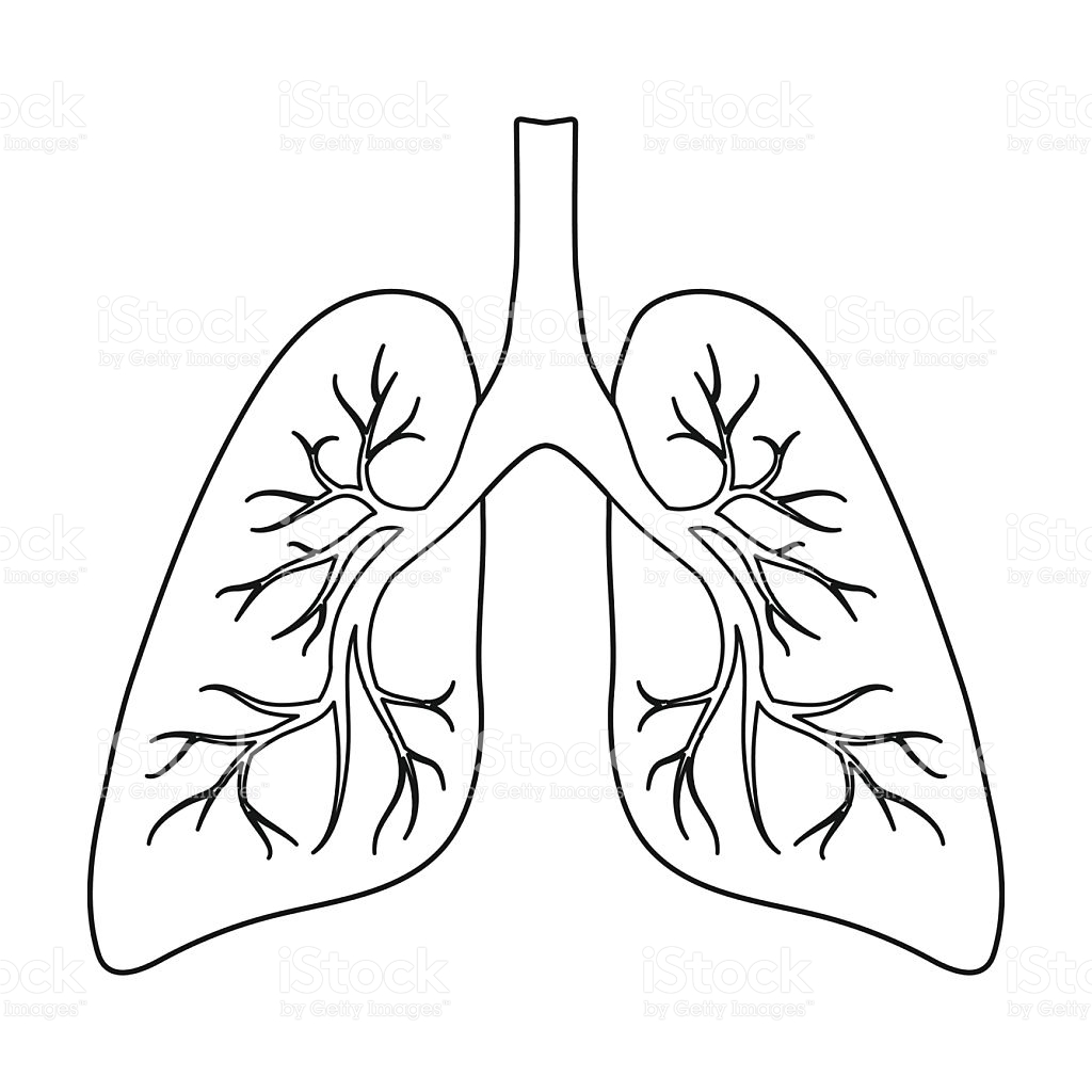 Clipart Outline Of Lungs 20 Free Cliparts