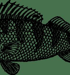 cod cartoon clipart  [ 1979 x 991 Pixel ]