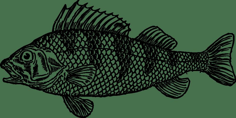 medium resolution of cod cartoon clipart
