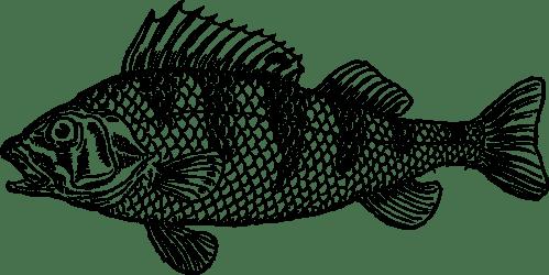 small resolution of cod cartoon clipart