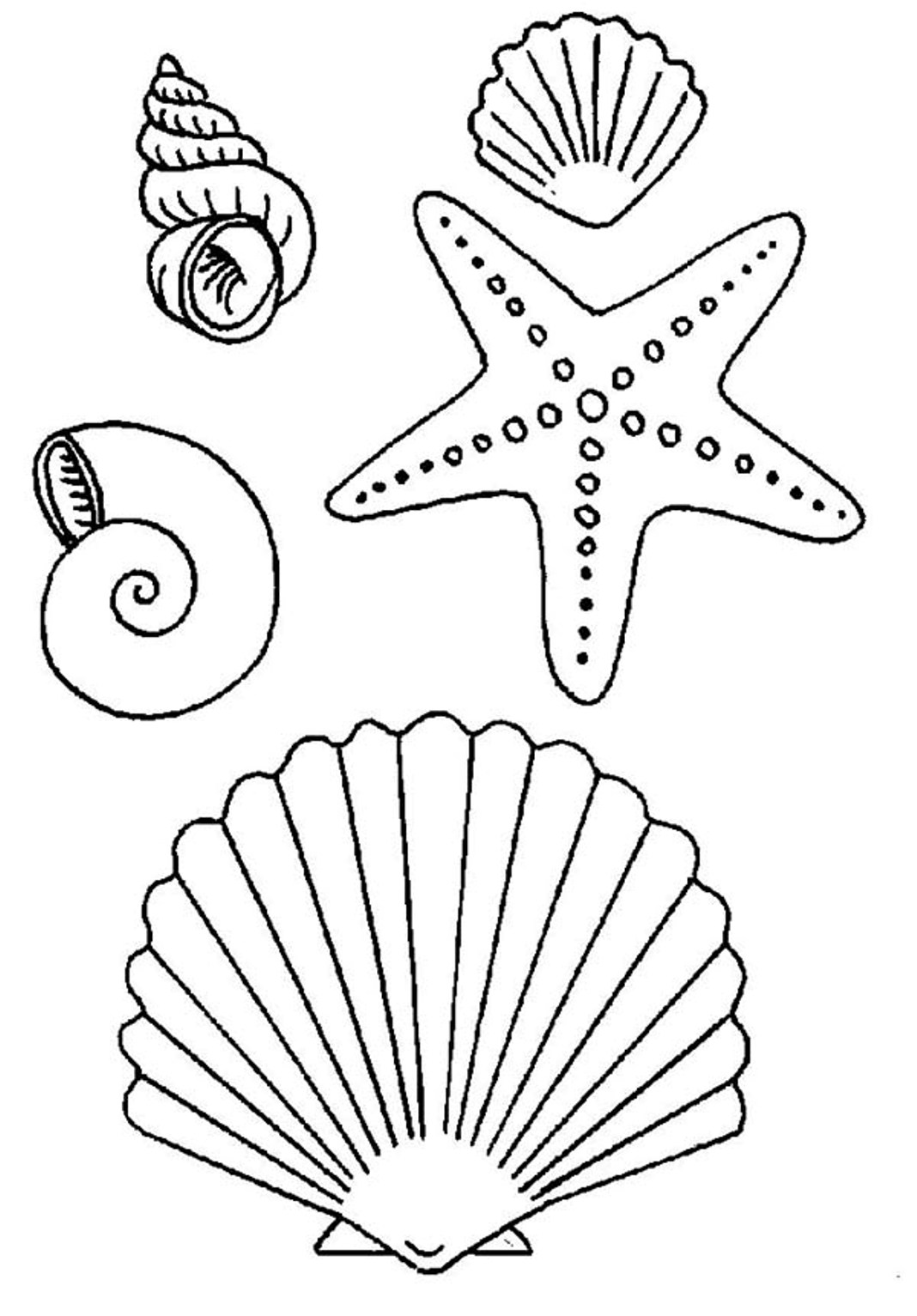 Color Seashells And Starfish Clipart
