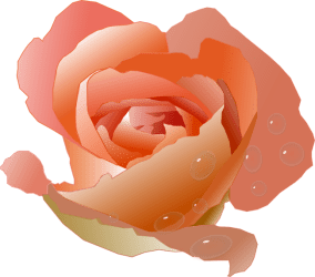 coral peach rose clipart clip flower flowers orange petals transparent roses soft animations giving vectors baby clipground dewdrops beauty nature