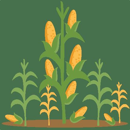 corn stalks clipart - clipground
