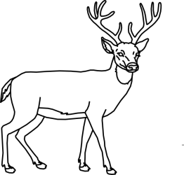 deer outline clipart clip head whitetail drawing vector animals coloring pages stencil clker wood clipground visit burning