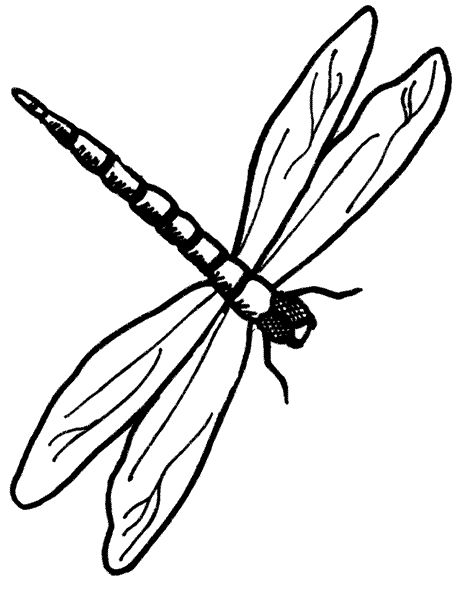 delicate dragonfly clipart - clipground