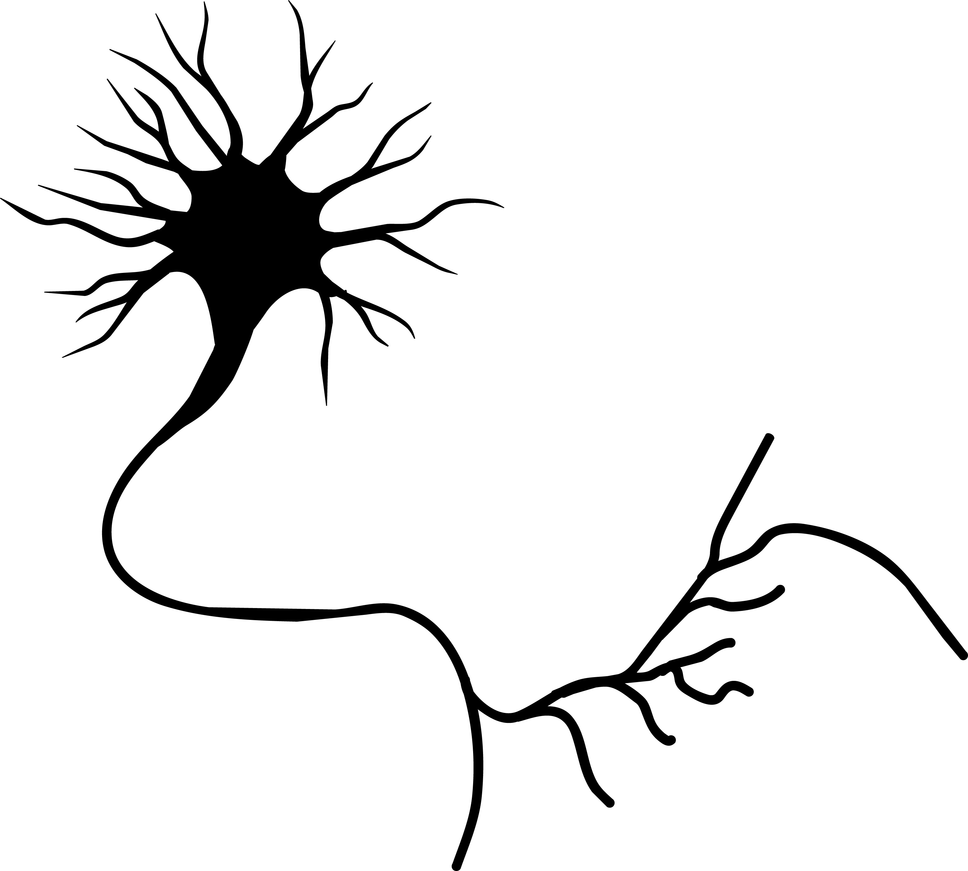Nerve Cell Clipart