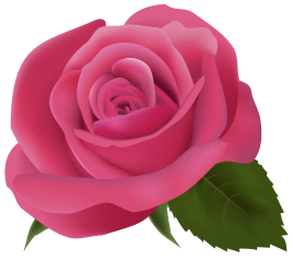 clipart pink rose roses clipground double