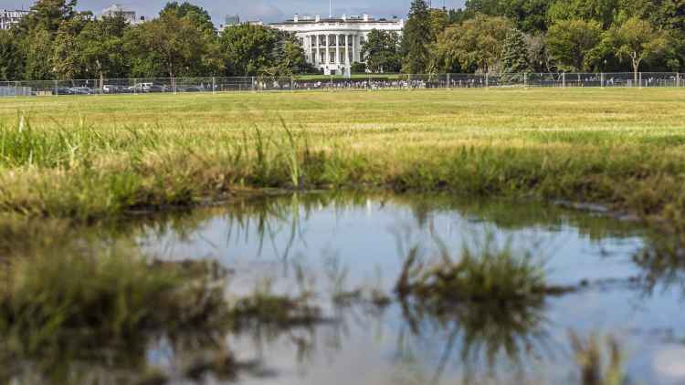 drain the swamp meaning 20 free Cliparts | Download images ...
