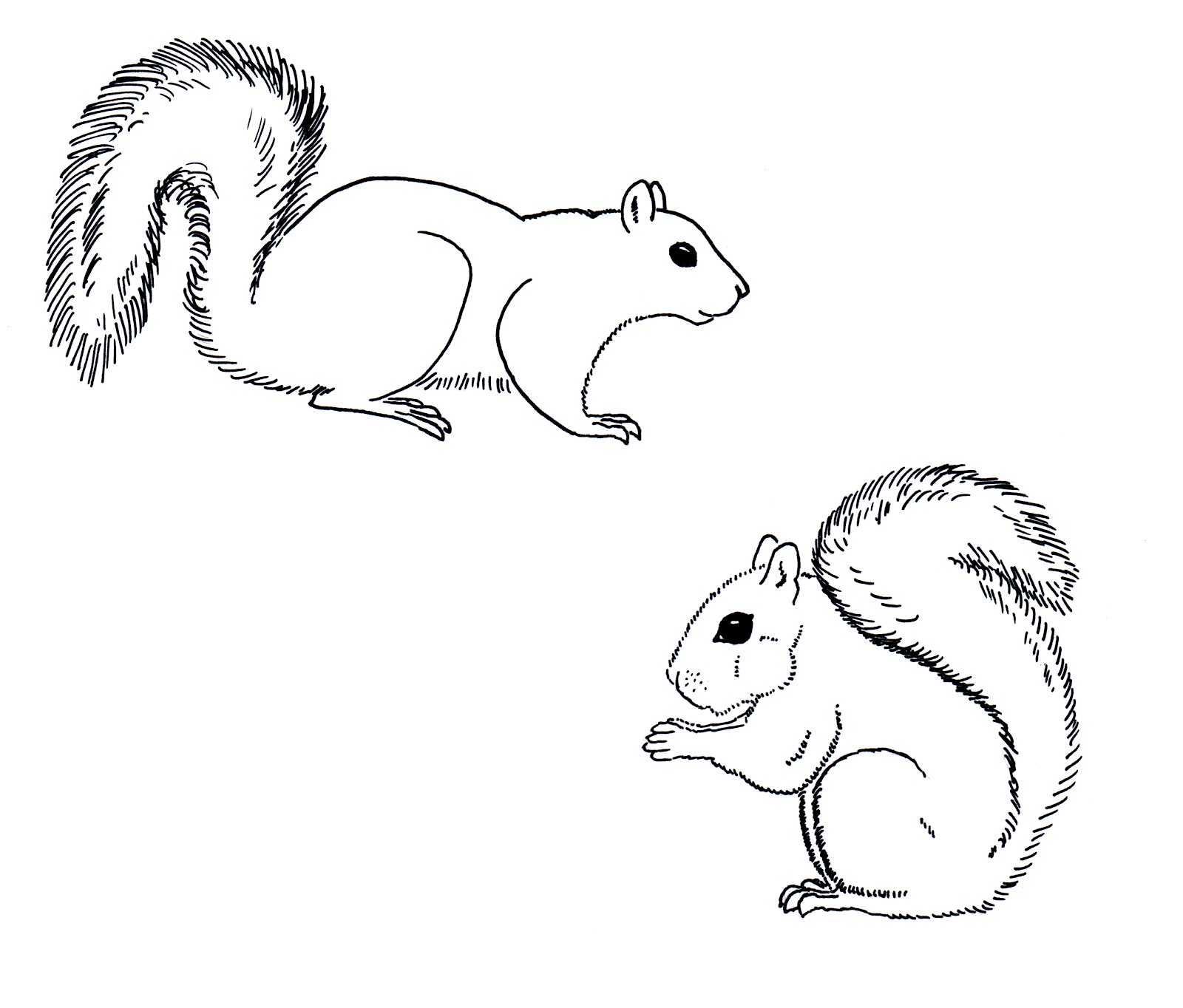 Eastern Gray Squirrel Clipart