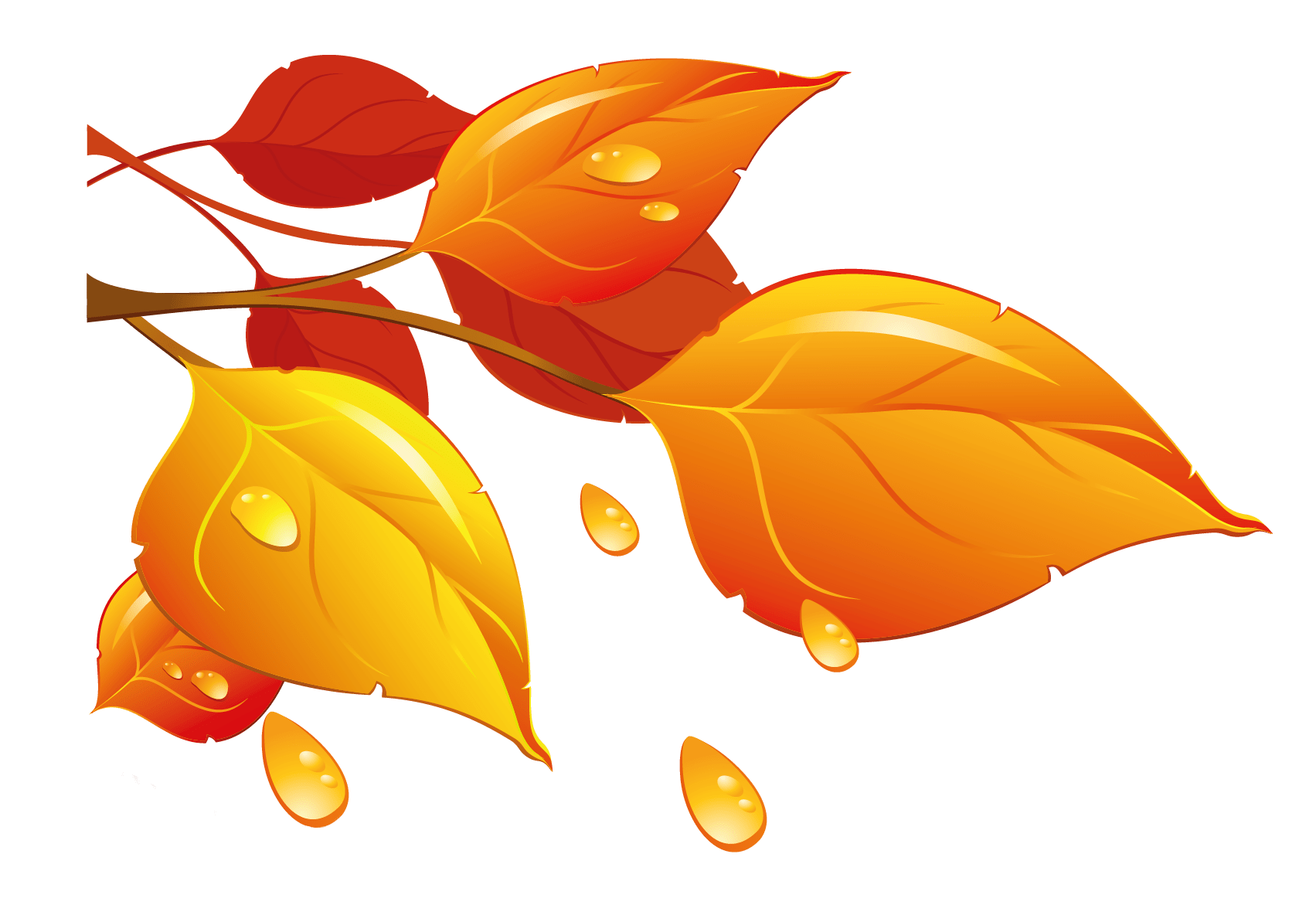 hight resolution of transparent autumn leaves png clipart