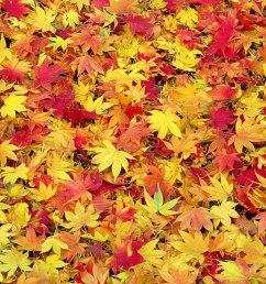 free fall desktop wallpaper downloads  [ 1440 x 900 Pixel ]