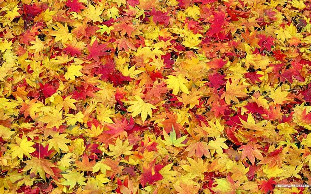 medium resolution of free fall desktop wallpaper downloads