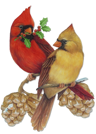 male cardinal clipart - clipground