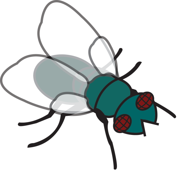 fly clipart - clipground