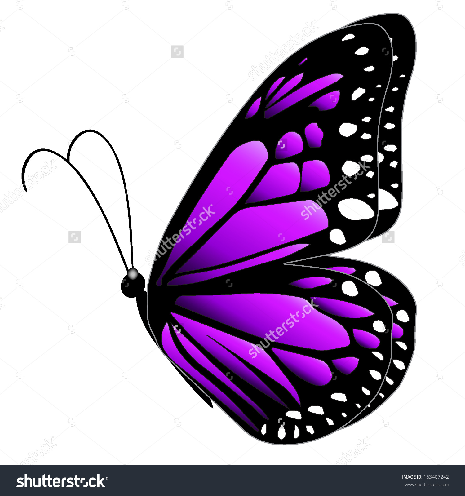 hight resolution of illustration purple butterfly flying on white stock vector