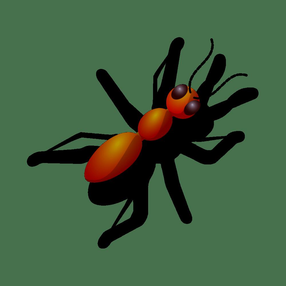 medium resolution of big eye ant clipart
