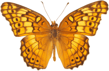butterfly transparent background butterflies yellow clipart orange clip backgrounds clipground freeiconspng type designs resolution downloads help