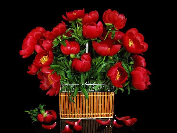 Cute Animated Wallpapers For Mobile Gif Bunch Of Flowers Images Download Clipground
