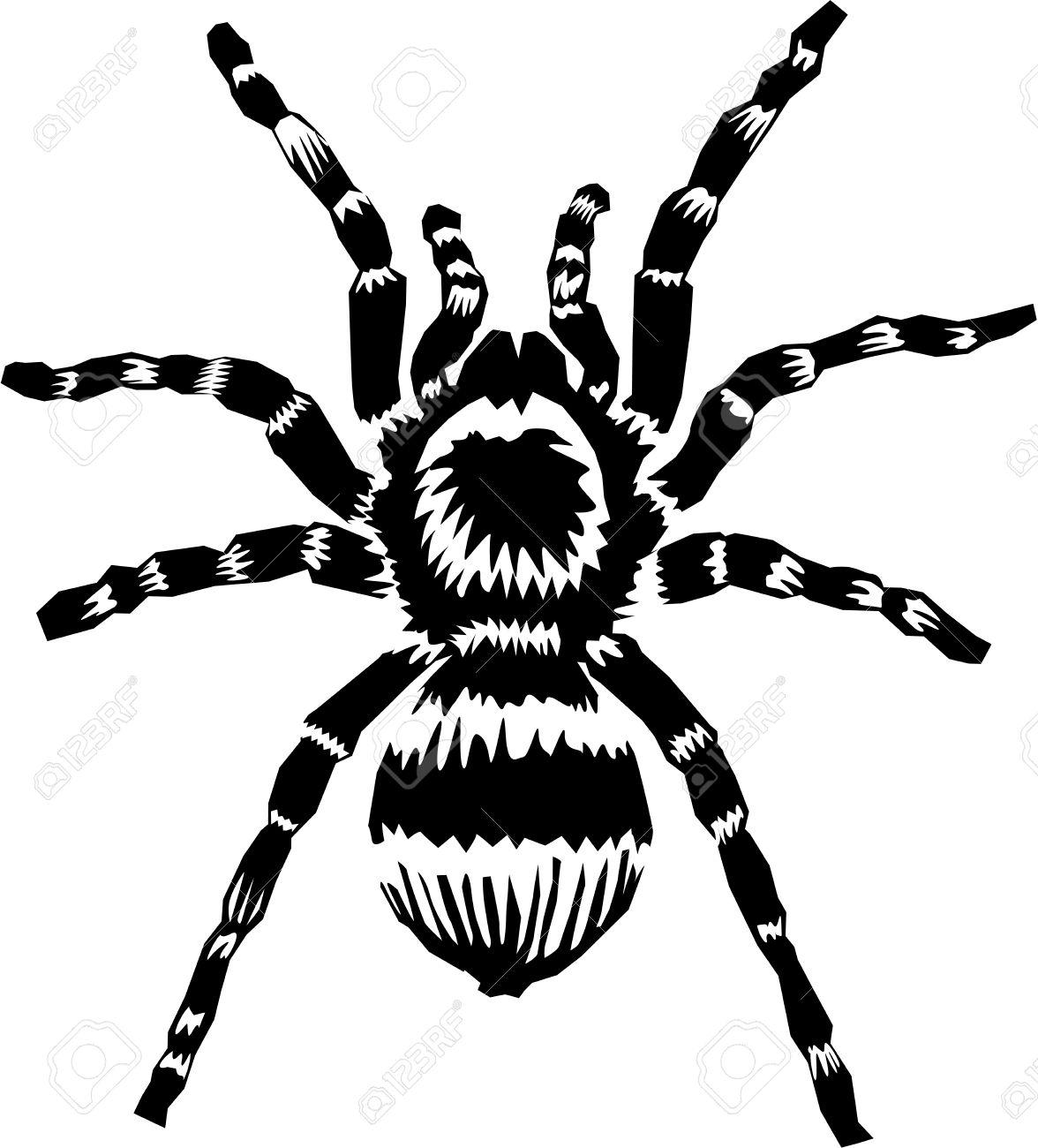 Garden Spiderweb Clipart