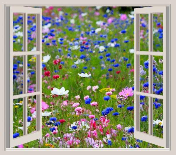 Garden Window Clipart - Clipground