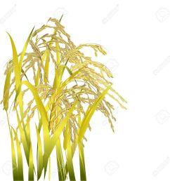 clipart rice grains  [ 1299 x 1300 Pixel ]