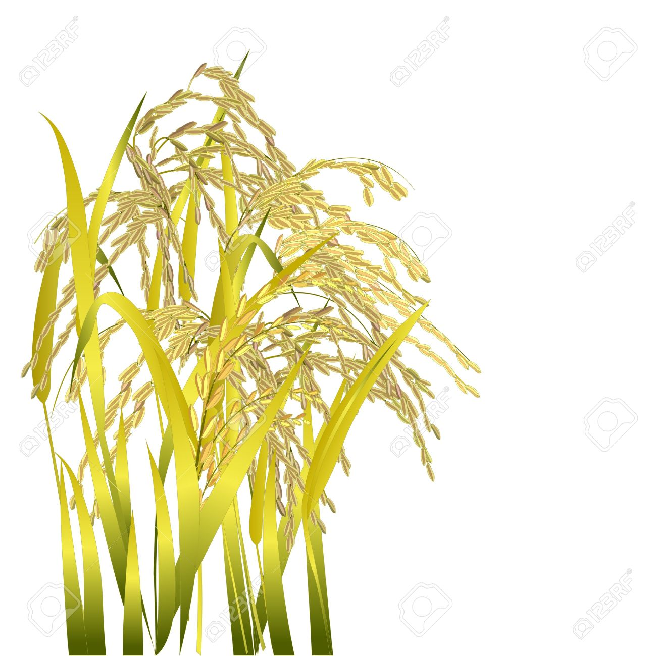 hight resolution of clipart rice grains