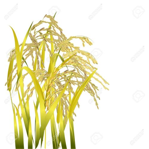 small resolution of clipart rice grains