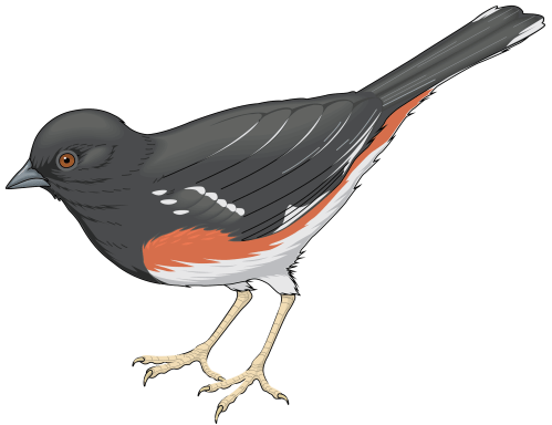 small resolution of grey bird png clipart