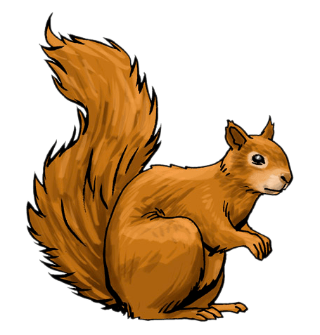 squirrel clipart - clipground