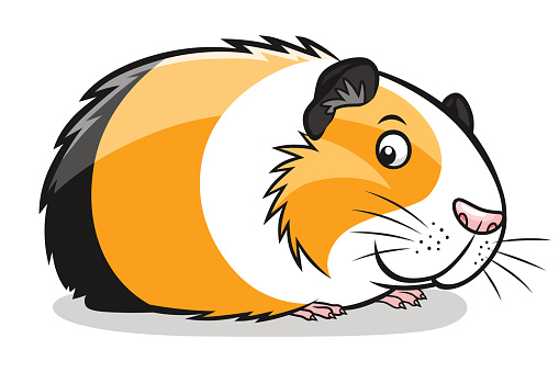 Coloriage Hamster Kawaii.20 Guinea Clip Art Cute Ideas And Designs