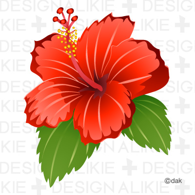 hibiscus double clipart - clipground