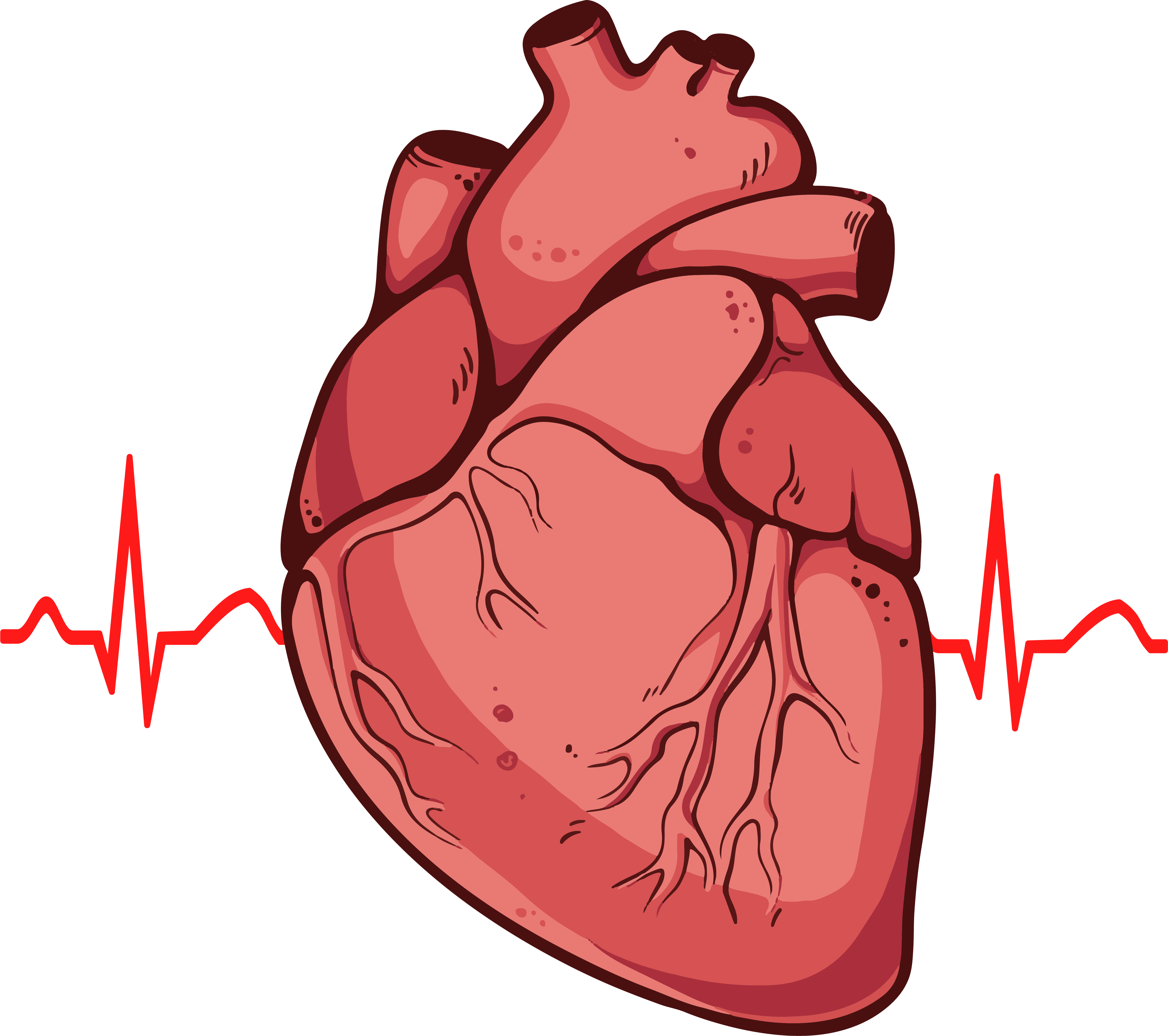 realistic heart diagram automotive wiring human clipart png clipground