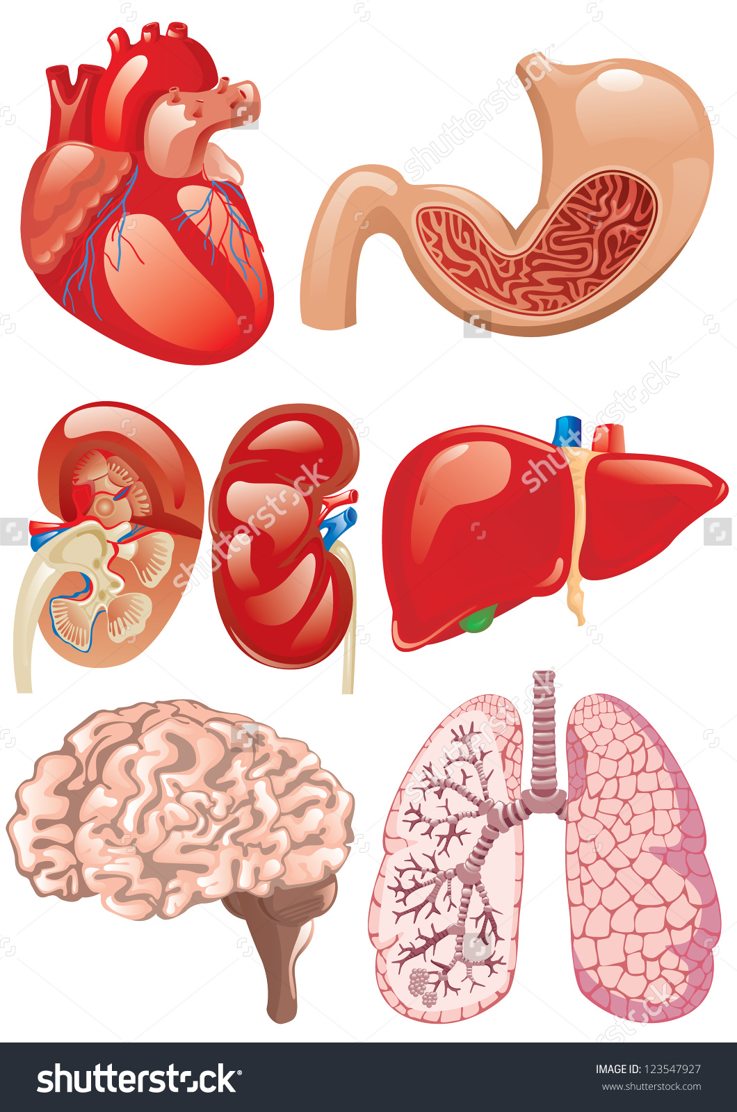 internal brain diagram notifier duct detector wiring human organ clipart - clipground