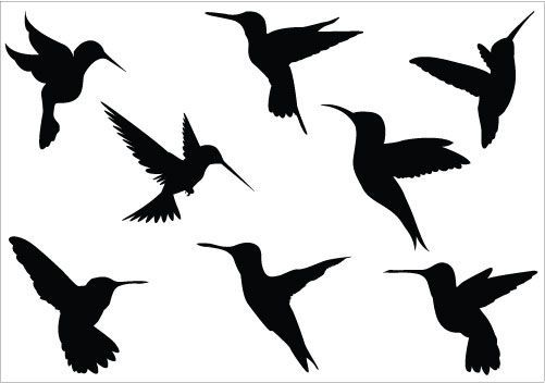 hummingbird clipart outline 20