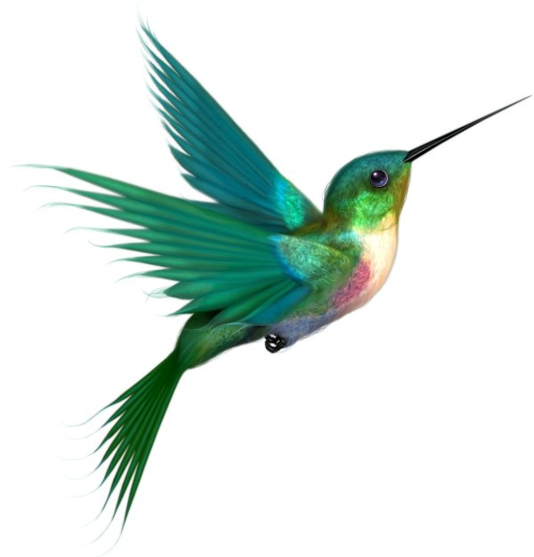humming bird clipart - clipground