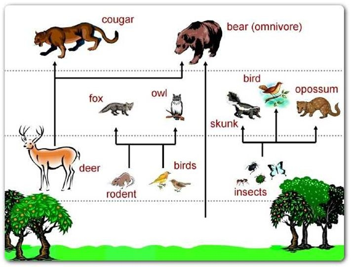 savanna animal food chain diagram er for library web pictures clipart clipground 1000 ideas about on pinterest